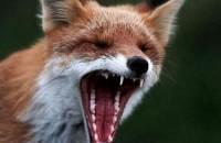 В Запорожской области убили бешеное дикое животное