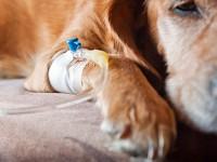 В Запорожье щенка выбросили с 5-го этажа жилого дома