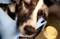 Немец нашёл хозяев для бездомной собаки из Бердянска (Фото)