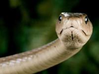 Беременная жительница Запорожской области наступила на змею