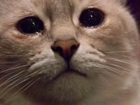 Тракторист повесил бездомного кота, укравшего у него колбасу
