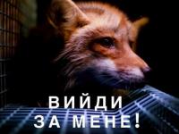 В Запорожье ищут организатора для митинга за права животных