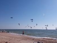 В небе над запорожским курортом увидели десятки вертолетов (Видео)
