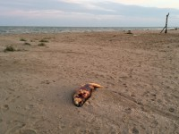 На запорожском курорте в результате шторма погибли дельфины