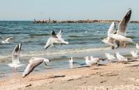Осеннее море: как выглядит опустевший запорожский курорт (Фоторепортаж)