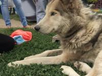 В Запорожье на улице нашли брошенного породистого пса (Фото)