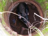 В Энергодаре из открытого колодца достали кабана (Фото)