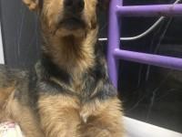В Запорожье нашли собаку с пулей в позвоночнике: нужна помощь (Фото)