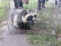 В спальном районе Запорожья из ливневки достали застрявшую енотовидную собаку (Фото)