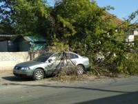 В Запорожской области дерево рухнуло на припаркованное авто