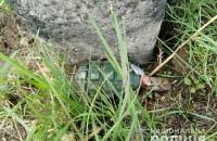 Движение поездов в Запорожской области приостановили из-за гранаты – подробности
