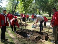 В Запорожье высадят почти сотню лип (Фото)