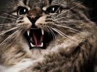 Жительница Запорожской области попала на больничную койку из-за кота