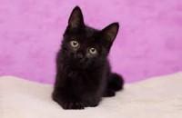 Запорожская волонтер призвала не отдавать черных кошек с собаками до Хэллоуина