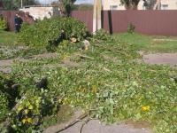 Упавшая ветка дерева убила глухонемую женщину – подробности (Видео)