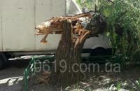 Надломившееся дерево повредило «ГАЗель»