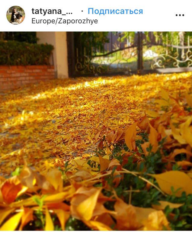 осень асфальт листья