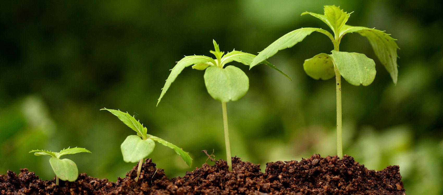 Стимуляторы роста растений – необходимый допинг для рекордного урожая