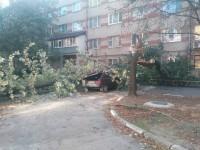 В запорожском дворе на легковушку упало дерево (Фото)