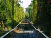 В Запорожье нашли местный «Тоннель любви» (Фото)