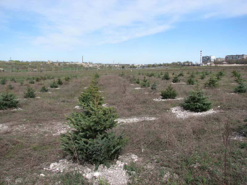 Запорожскую область засаживают лесами