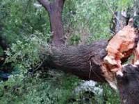 Жителя запорожского села убило рухнувшим деревом