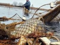Безработный запорожец получил судимость за незаконный вылов рыбы