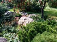 В экзотическом саду, выращенном жительницей Полог, школьники фотографируются на выпускные альбомы (Фото)
