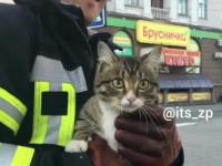 Happy end: в Запорожье спасли кота, застрявшего в ливнёвке (Видео)