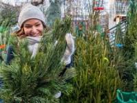 Опубликованы средние цены на елки в Запорожской области