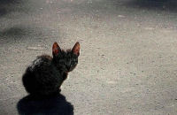 Пенсионер, убивший котенка об стену, получил минимальный штраф