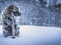 Зима близко: запорожцам на выходные пообещали метель и гололёд