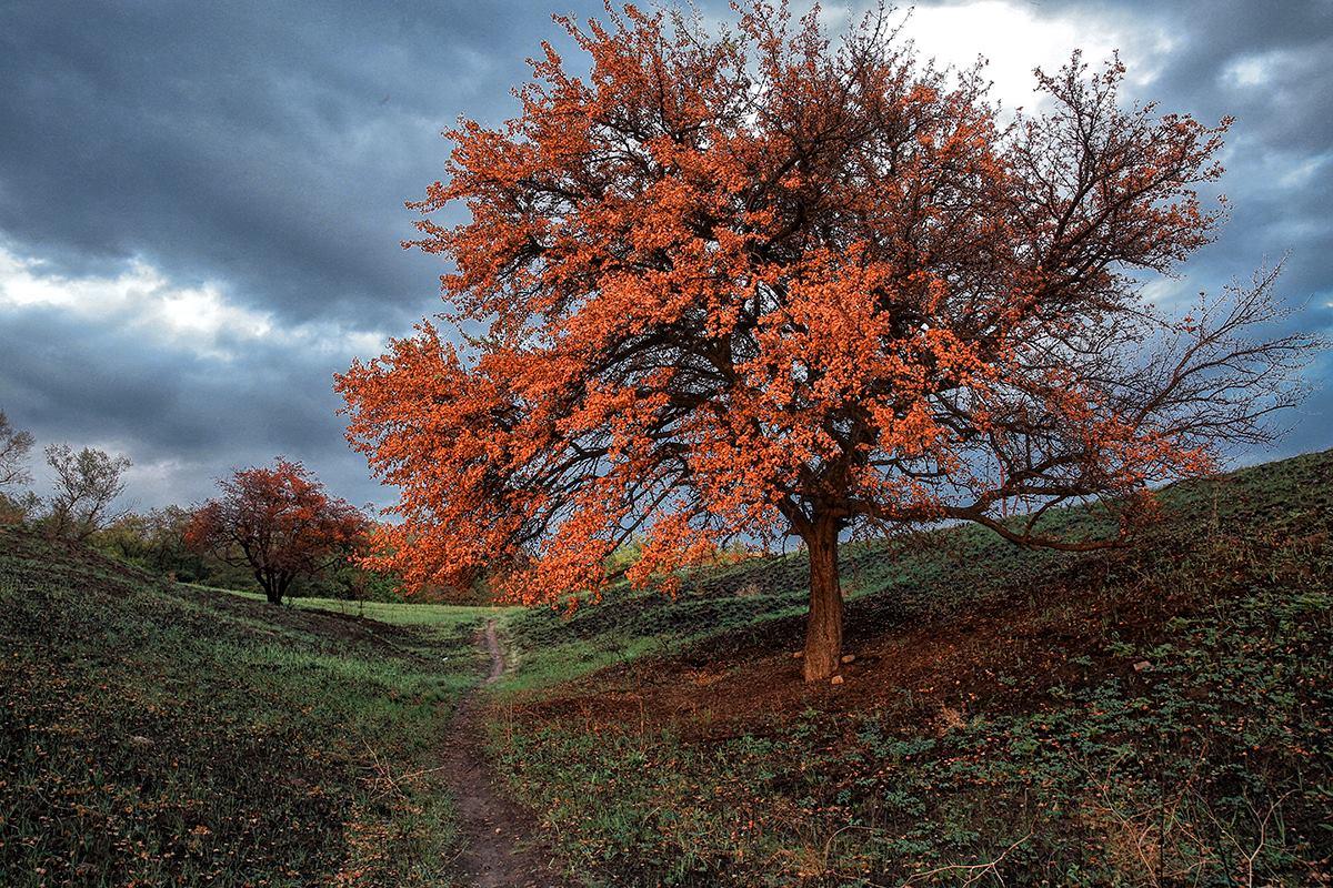 Четыре времени года на Хортице: запорожский фотограф поделился красочными фото