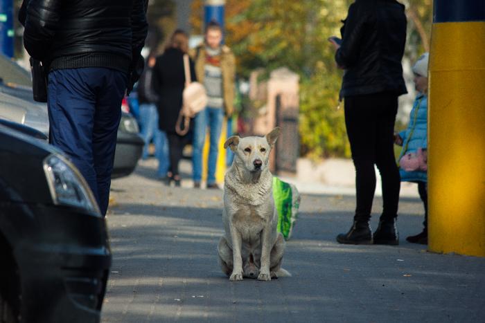 Как помочь бездомным животным пережить холода – несложная инструкция (Фоторепортаж)