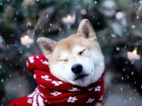 В Запорожской области выпал первый снег (Видео)