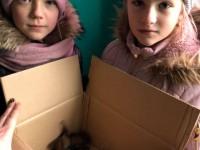 В Запорожской области из-за ураганного ветра погибли летучие мыши