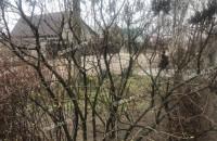 С наступающим: в Запорожской области в конце декабря зацвела сирень (Фото)