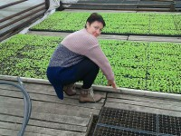Запорожские фермеры, выращивающие салат: » В прошлом году пришлось выбросить 10 тонн»