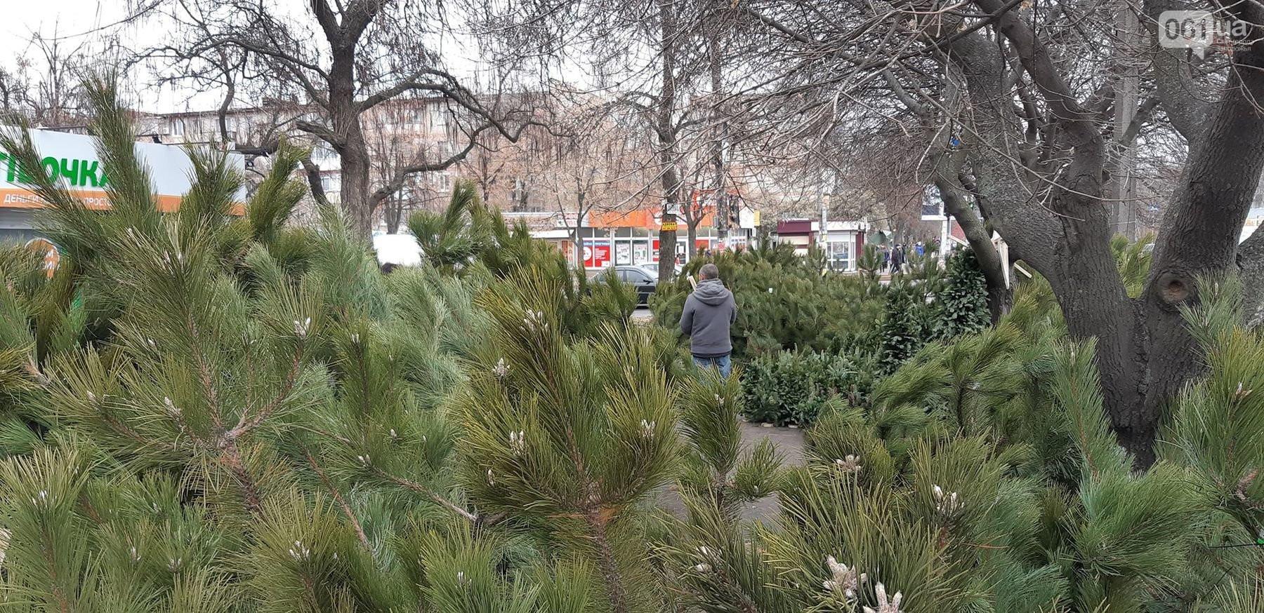 Ветки, ёлочки на подставке и огромные сосны - в Запорожье начали работать ёлочные базары