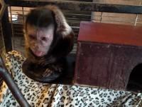 В зоопарке в Васильевке поселились редкие животные: им нужна помощь (Фото)