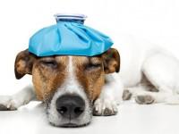Уроки доброты: В Запорожье эпидемия чумы или зачем вакцинировать собак