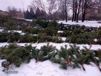 В центре Запорожья накрыли большую точку с незаконно вырубленными елками