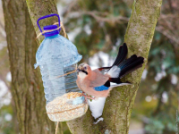 Уроки доброты: чем кормить птиц зимой