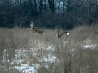 Кабаны, олени и птицы: запорожский натуралист показал обитателей зимней Хортицы (Фото)