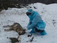 В Бердянском районе ввели карантин из-за бешеной волчицы, покусавшей людей