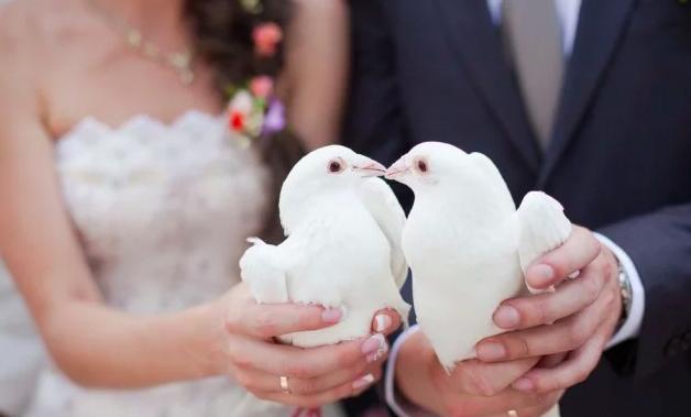 Уроки доброты: куда деваются после свадьбы голуби и почему нужно отказаться от этой традиции