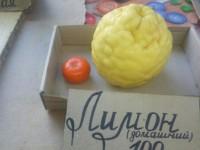 Фермер из Мелитопольского района вырастил килограммовые лимоны