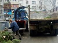 Утилизируют прямо во дворе: запорожские коммунальщики на уборку ёлок приезжают с дробильной машиной