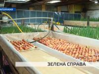 В Запорожье боец АТО открыл цех по выращиванию лука (Видео)