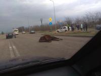 На Хортице сбили лошадь – образовалась пробка